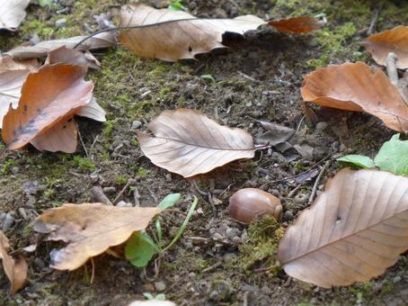 Autumn landscape of a certain park ② 2014/11