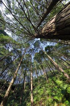 노송 나무