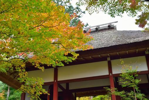 Jōjakkoji Temple Niomon Tomomiji Autumn Leaves 002