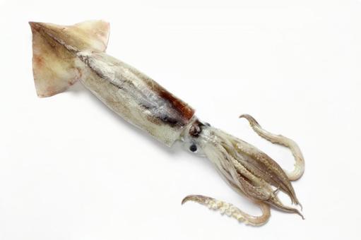생 오징어