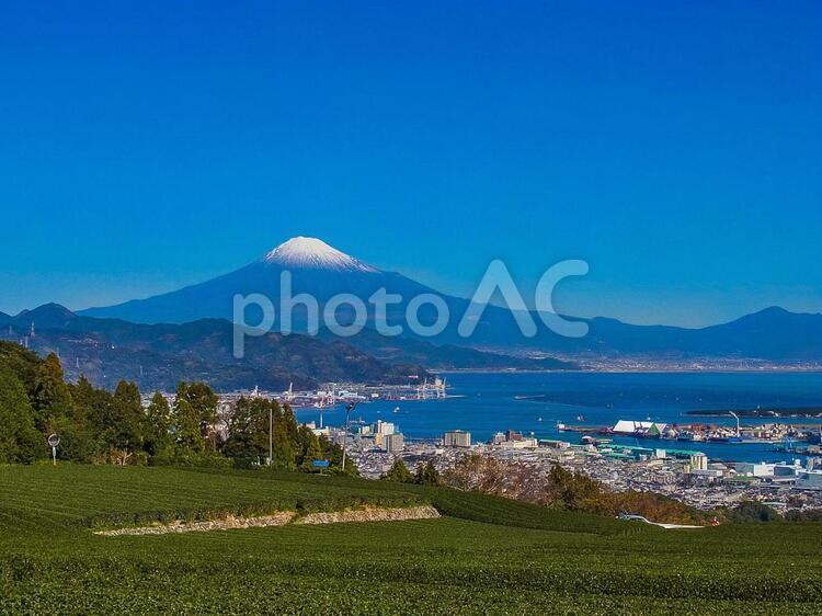 茶畑と富士山の写真