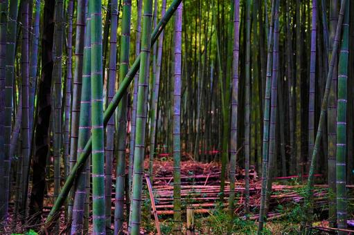 Bamboo forest full of green