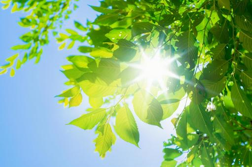 Summer sky_fresh green