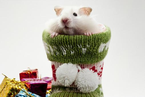 Hamster looking out of boots