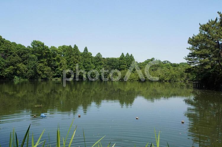 三宝寺池の写真