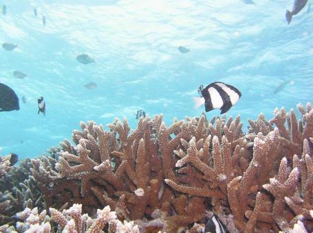 In the sea of tropical Saipan