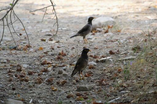 Pakistan Bird 7