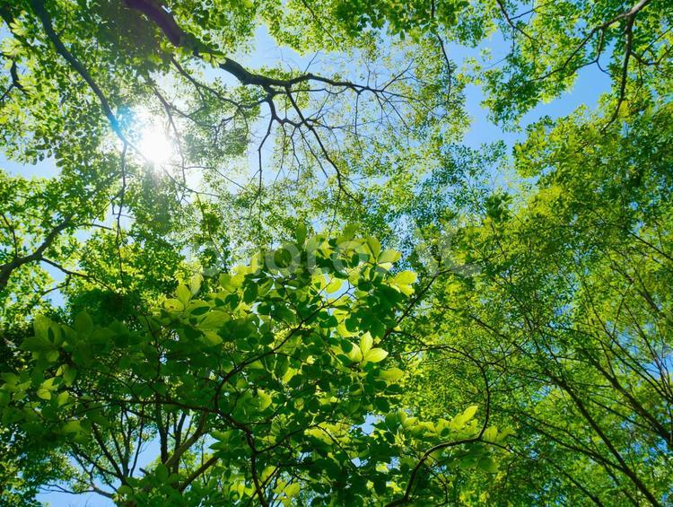 6月の緑の写真