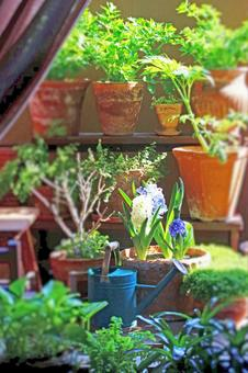陽台園藝園藝