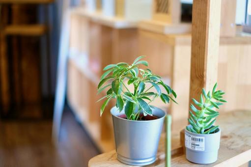 Showroom foliage plants