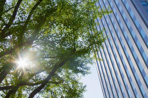 햇살과 오피스 빌딩