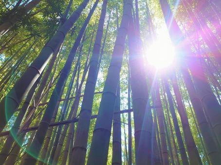 Bamboo Forest/9