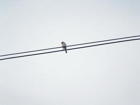 Sparrows and wires