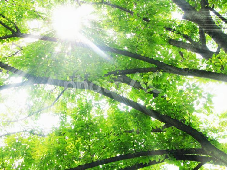 木陰から漏れる日射しの写真