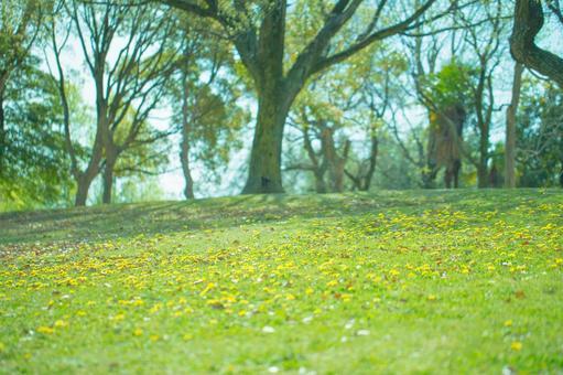 Clean flower garden 6