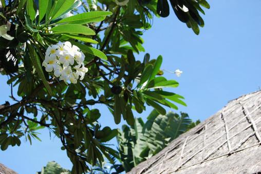Asian roof and plumeria