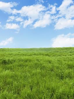 夏季牧場,雲層和藍天垂直位置