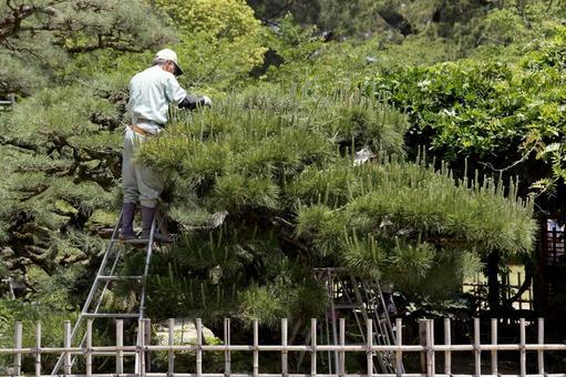 일본 정원