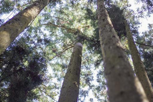 숲의 나뭇잎 사이로 비치는 햇빛 1