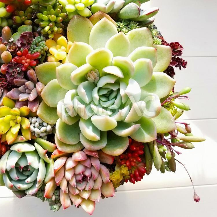 多肉植物寄せ植えの写真