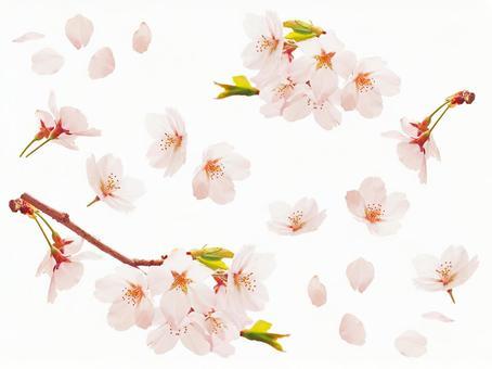 Sakura material assortment 2 (for PSD · web)