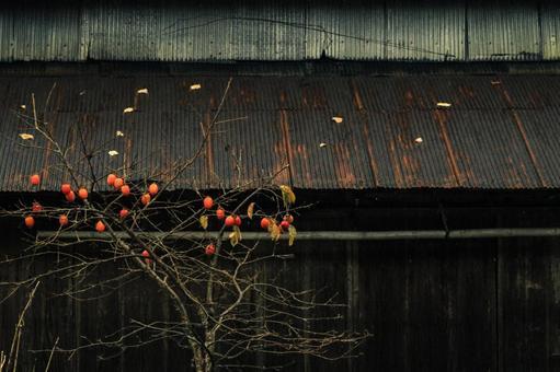 사 토야마 풍경과 감나무