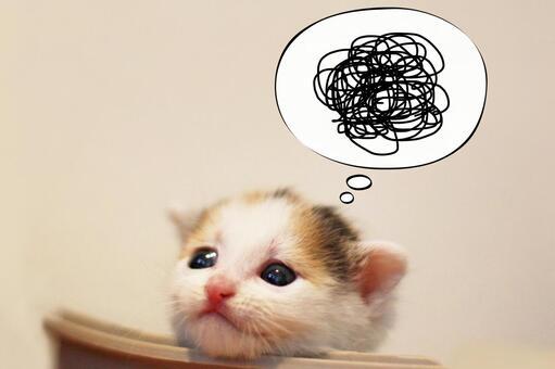 Sprinkle kittens