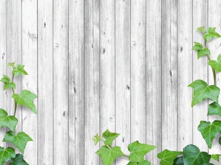 텍스처 [아이비와 흰 나무 벽 03]