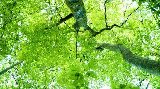 Summer fresh green forest nature background