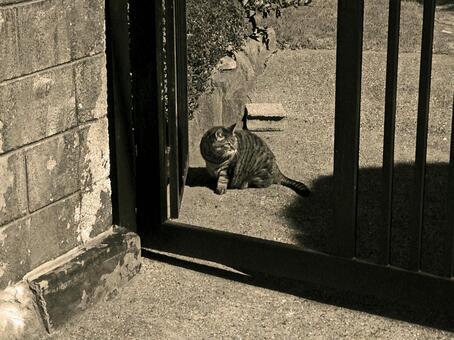 Hinata cat