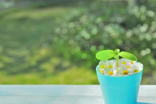 Futaba and flower pot