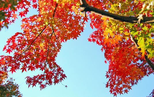 Ah leaf leaf e