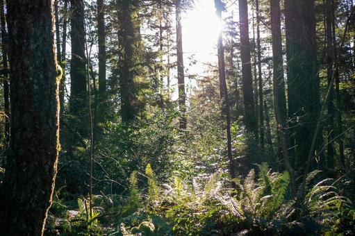 캐나다 숲과 햇살