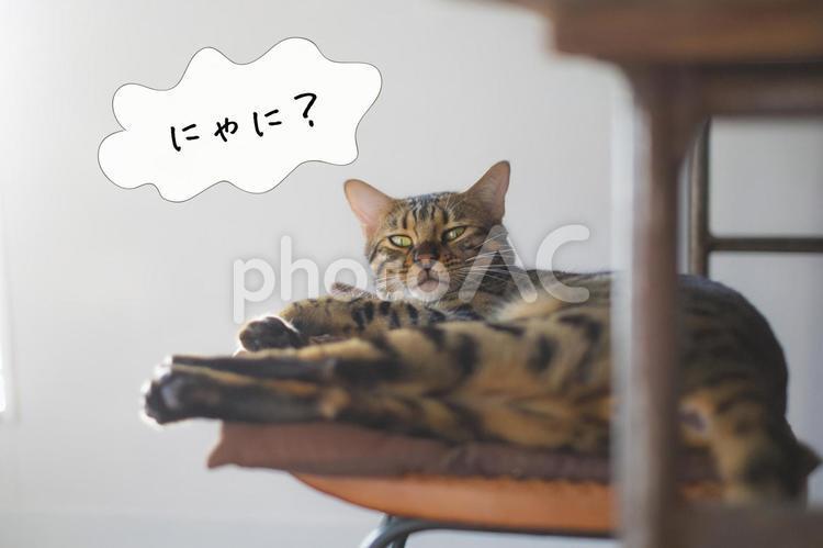 しゃべる猫シリーズ『にゃに?』の写真