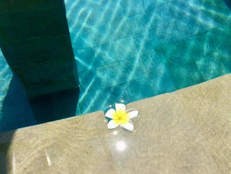 Plumeria floating on the water's edge