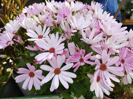 분홍색 귀여운 꽃