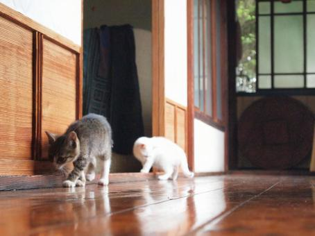 Cats studying in the house ③