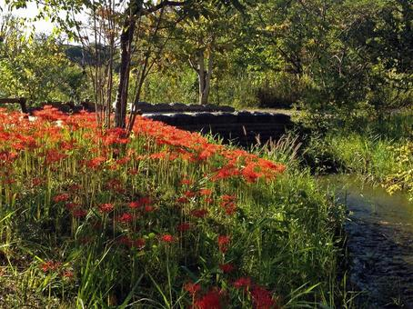 피안 꽃이 피는 풍경