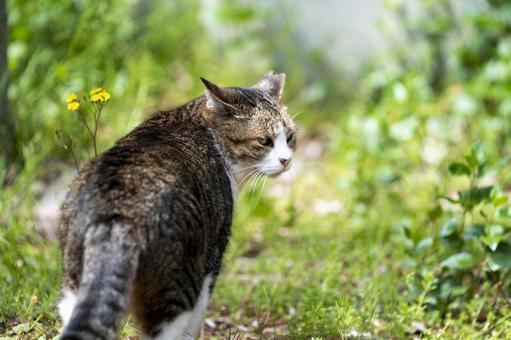 猫の後ろ姿の写真素材|写真素材なら「写真AC」無料(フリー)ダウンロードOK