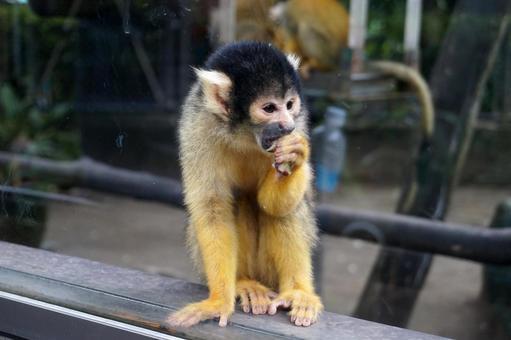 松鼠猴鳳凰動物園