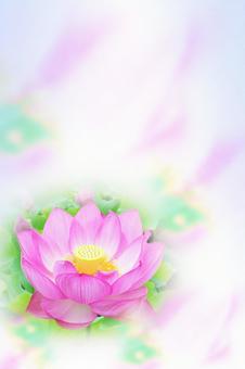 연꽃 엽서 수직