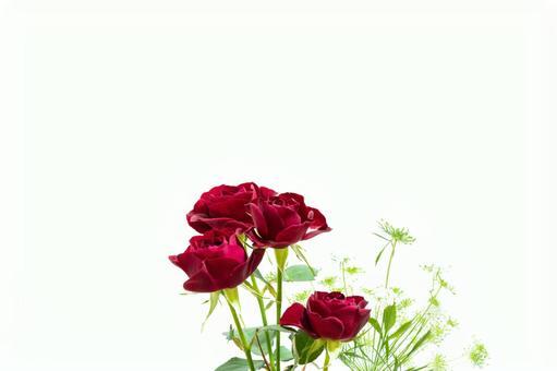 붉은 스프레이 장미