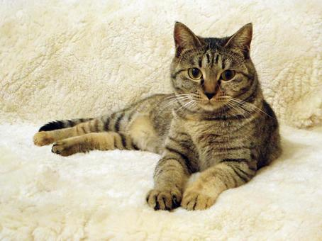 휴식 고양이 러브 *