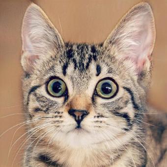 Surprised face cat animal