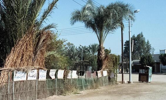 Egyptian plants 2