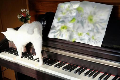 고양이와 피아노