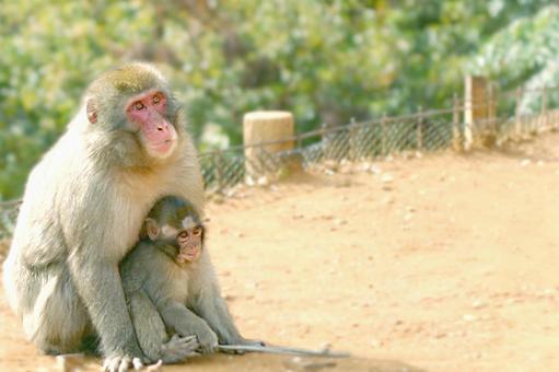 父母和孩子的猴子
