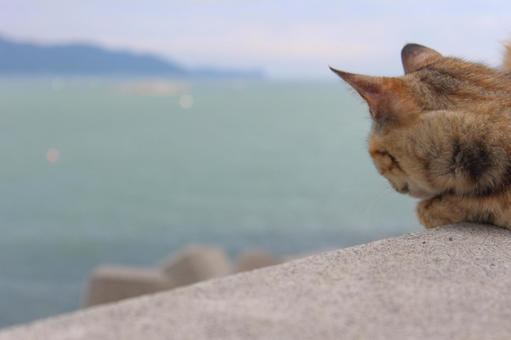 도둑 고양이와 바다