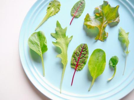 Baby leaf leafy vegetables