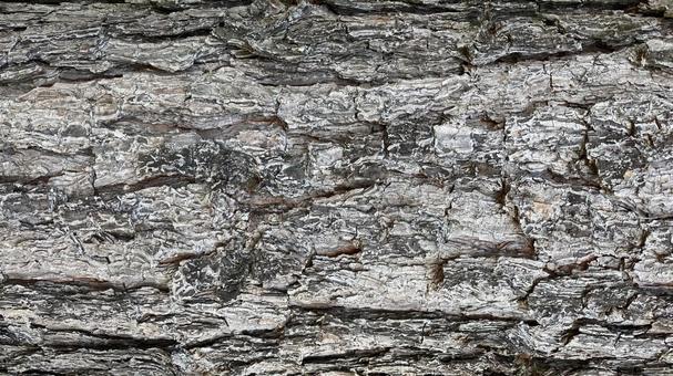 나무의 표피